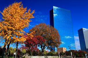 紅葉の大阪城公園から望むビジネスパークの写真素材 [FYI01741227]