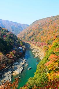 嵐山公園から望む紅葉した京都嵐山と保津川の写真素材 [FYI01741265]