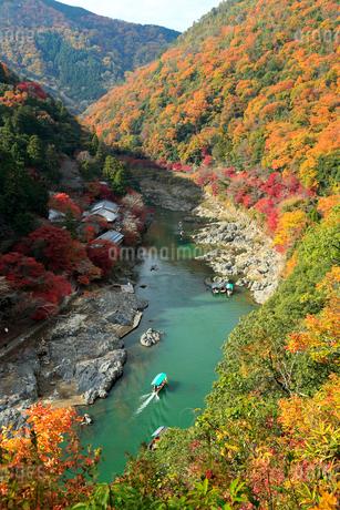 紅葉の嵐山 嵐山公園から望む保津川下りの写真素材 [FYI01741429]