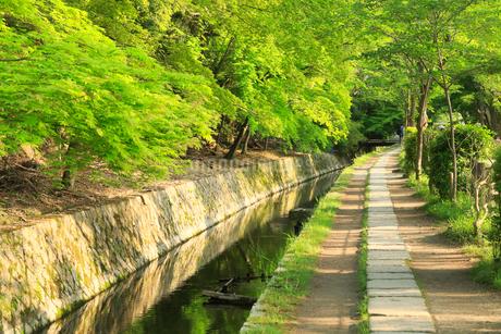 新緑の京都 哲学の道の写真素材 [FYI01741462]