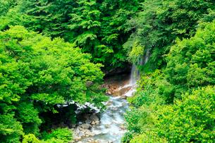 岩手県 八幡平 新緑の松川渓谷の写真素材 [FYI01741545]