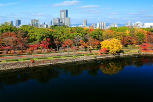 紅葉の大阪城公園から望むビジネスパークの写真素材 [FYI01741604]
