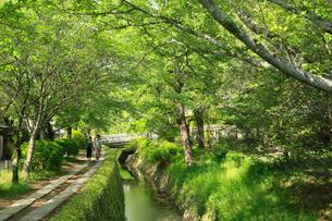 新緑の京都 哲学の道の写真素材 [FYI01741677]