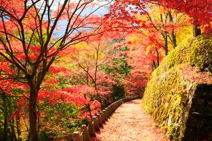 奈良の吉野山の紅葉の写真素材 [FYI01741692]