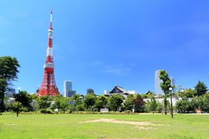 新緑の芝公園から望む東京タワーの写真素材 [FYI01741908]