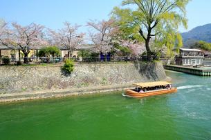 京都 桜咲く琵琶湖疏水と船の写真素材 [FYI01741921]