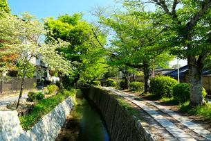 京都 新緑の哲学の道の写真素材 [FYI01741926]