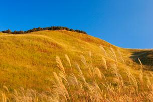 曽爾高原のススキの写真素材 [FYI01741983]
