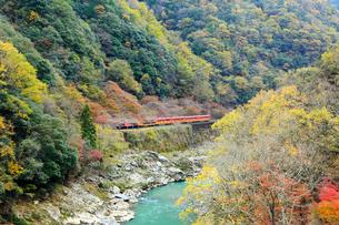 紅葉した保津峡を走るトロッコ列車の写真素材 [FYI01742022]