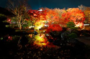 兵庫県 好古園の紅葉の写真素材 [FYI01742161]