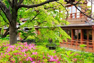 新緑の祇園白川の写真素材 [FYI01742224]