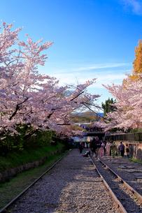 京都 蹴上インクラインの桜の写真素材 [FYI01742306]