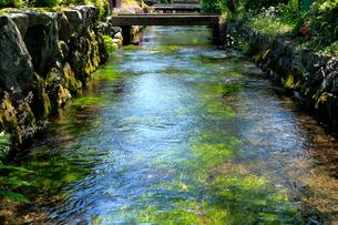 滋賀県 醒井 地蔵川の写真素材 [FYI01742398]