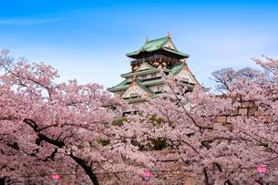 大阪城と桜の写真素材 [FYI01742457]