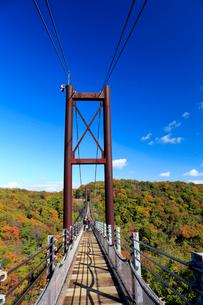 ほしだ園地紅葉と吊橋の写真素材 [FYI01742510]