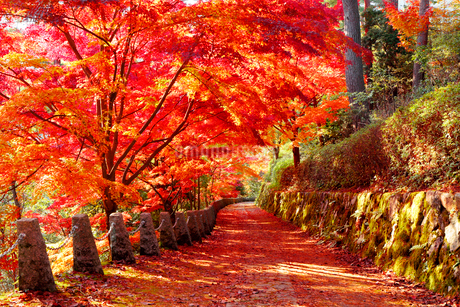 奈良県 吉野山の紅葉の写真素材 [FYI01742515]