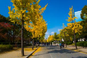大阪城公園の紅葉とビジネスパークの写真素材 [FYI01742567]