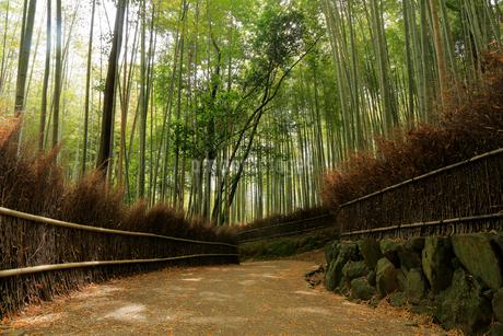 京都 嵯峨野 竹林の道の写真素材 [FYI01742578]