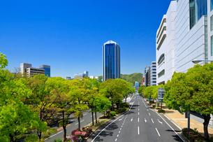 神戸,フラワーロードの写真素材 [FYI01742660]