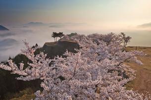 竹田城の雲海と桜の写真素材 [FYI01742760]