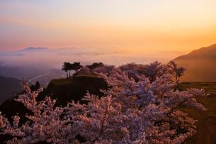 竹田城の雲海と桜の写真素材 [FYI01742786]