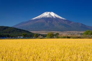 実りの稲穂と富士山の写真素材 [FYI01742838]