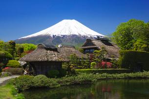 新緑の忍野より富士山の写真素材 [FYI01742871]