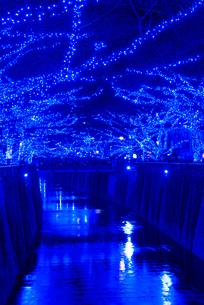 目黒川イルミネーション 青の洞窟の写真素材 [FYI01742889]