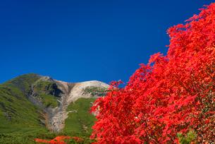 紅葉と乗鞍岳の写真素材 [FYI01742911]