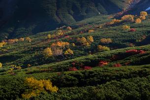 乗鞍岳位ヶ原の紅葉の写真素材 [FYI01742921]