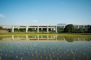 水田に写る高速道路の写真素材 [FYI01742948]