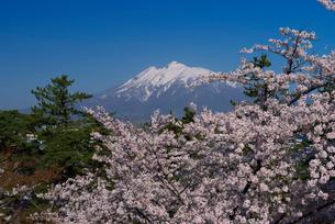 弘前公園の桜と岩木山の写真素材 [FYI01742991]
