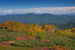 乗鞍岳位ヶ原の紅葉の写真素材 [FYI01742993]