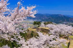 竹田城の桜の写真素材 [FYI01743048]