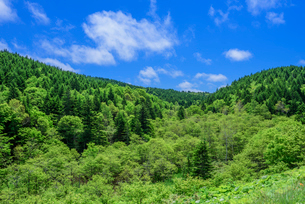 新緑の森と青空の写真素材 [FYI01743068]