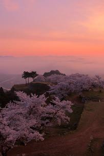 竹田城の雲海と桜の写真素材 [FYI01743111]