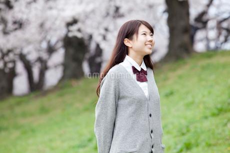 桜と女子高生の写真素材 [FYI01743545]