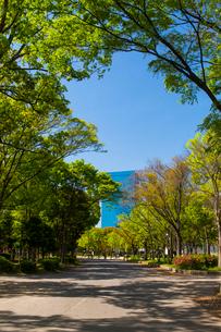 大阪城公園の新緑とビジネスパークの写真素材 [FYI01743621]