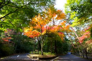 秋の紅葉の神戸再度公園の写真素材 [FYI01743693]