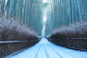 京都 冬の嵐山 竹林の道の写真素材 [FYI01743765]