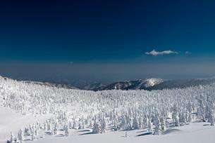 蔵王地蔵山頂の樹氷の写真素材 [FYI01743865]