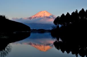 田貫湖湖畔より望む夕景の富士山の写真素材 [FYI01743917]