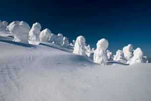 蔵王地蔵山頂の樹氷の写真素材 [FYI01744090]