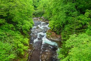 新緑の千走川の写真素材 [FYI01744288]