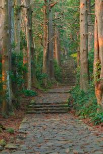 熊野古道の大門坂の写真素材 [FYI01744377]