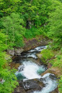 新緑の千走川の写真素材 [FYI01744385]