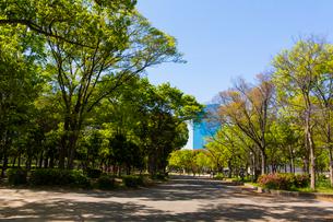 大阪城公園の新緑とビジネスパークの写真素材 [FYI01744399]