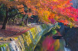 京都 紅葉した哲学の道の写真素材 [FYI01744447]