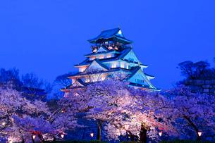 大阪城と夜桜の写真素材 [FYI01744660]