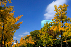 大阪城公園の紅葉とビジネスパークの写真素材 [FYI01744749]